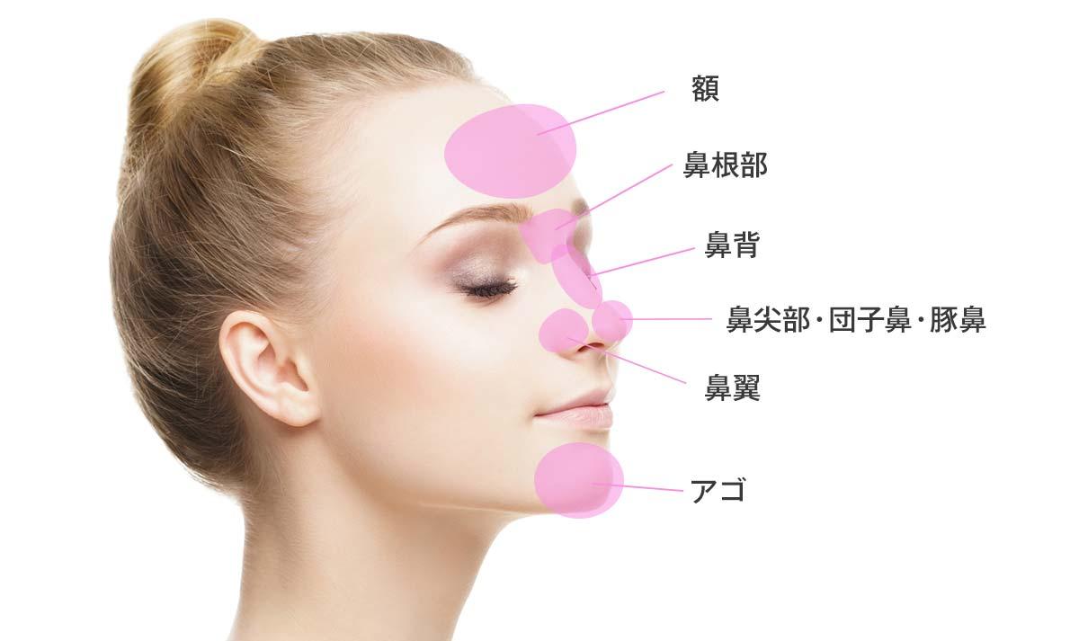 鼻の各部位・名称